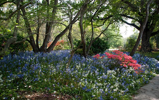 Christchurch_gardens,_New_Zealand