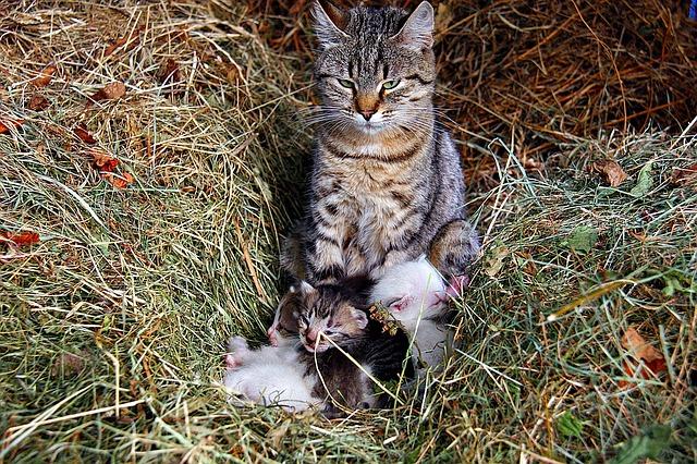 cat-1291725_640