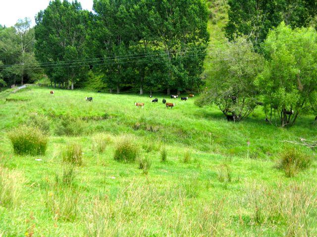 Hagley Farm