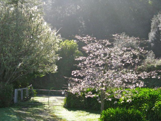 Cobwebs_Early_Spring_ Morning