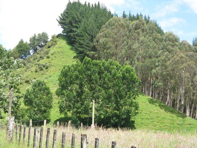 Trees Hagley Farm