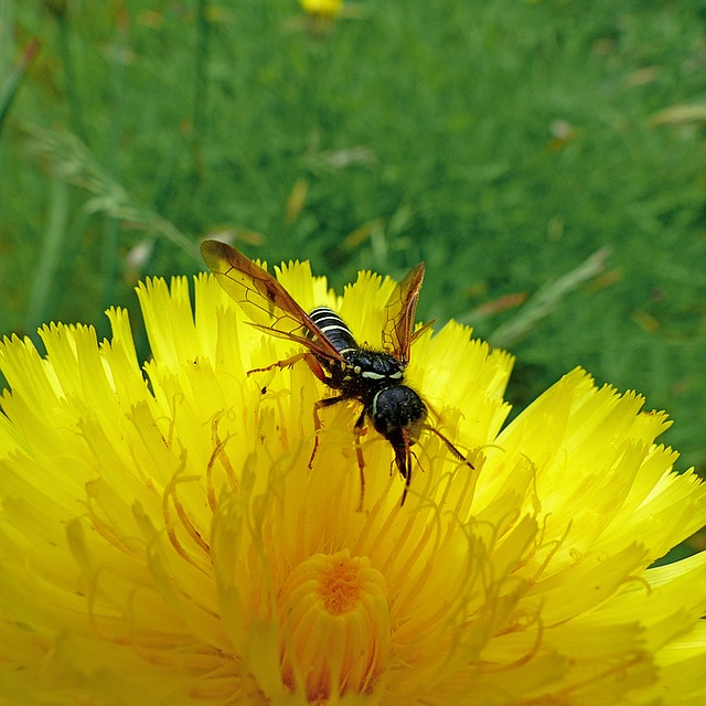 insects-1498696_640