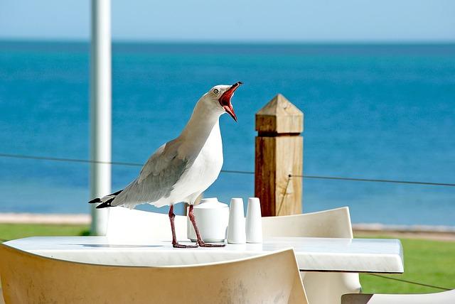 seagull-1209875_640.jpg