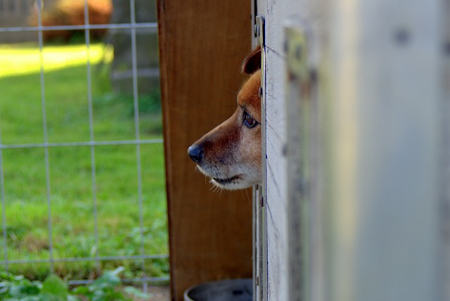 animal-shelter-1558651_640
