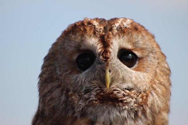 owl-1566419_640