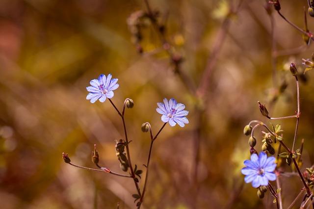 pyrenees-storchschnabel-1612450_640