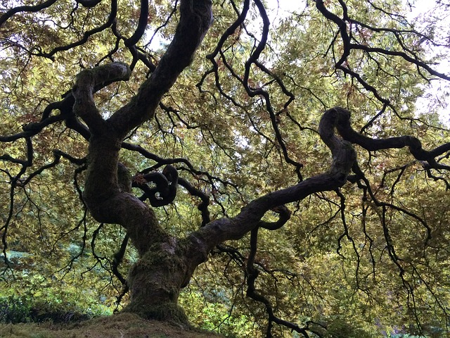tree-1561827_640