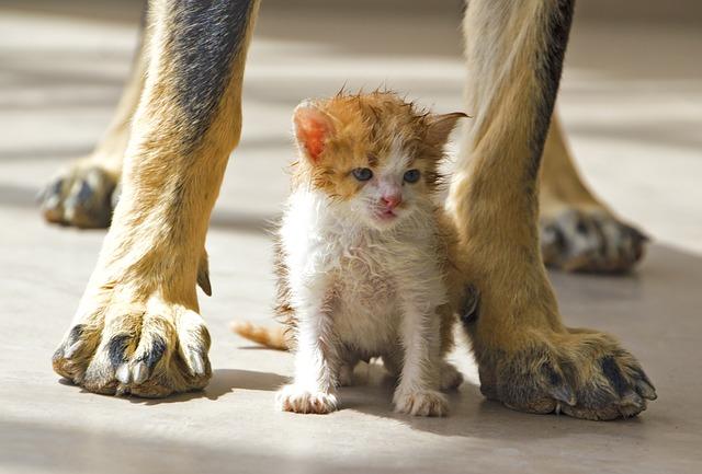 cat-1762288_640