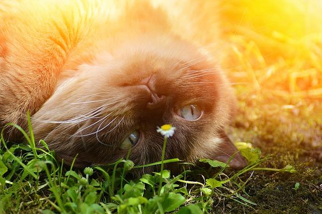 cat-1794083_640