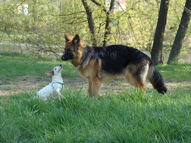 dog-1820184_640