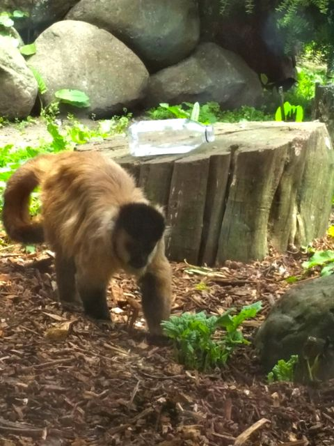 monkey-brookland-zoo-np