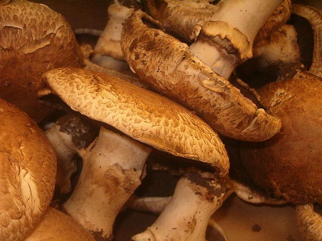 640px-portobello_mushrooms