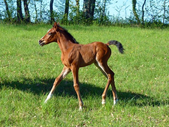 horse-1987499_640