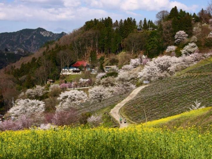 kashiwabara