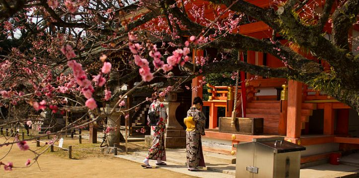 plum_trees_kitano_tenmangu