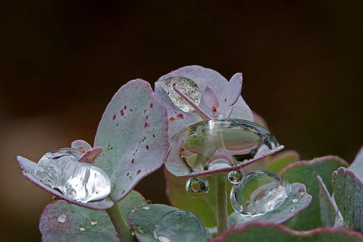 after_the_rain_14316460762