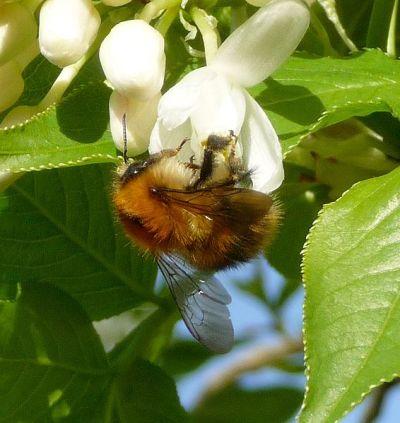 Flower_ Bee