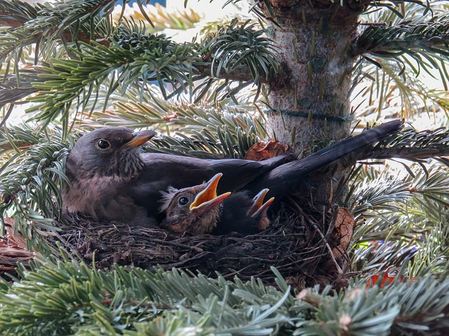 bird-2234964_640