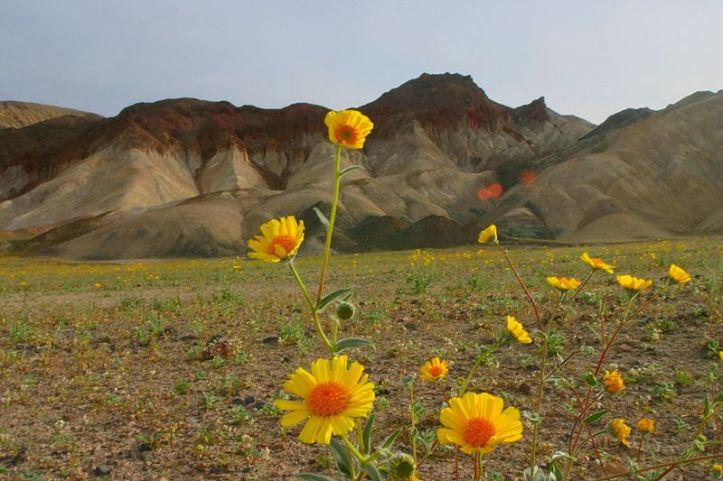 800px-Wild flowers_1