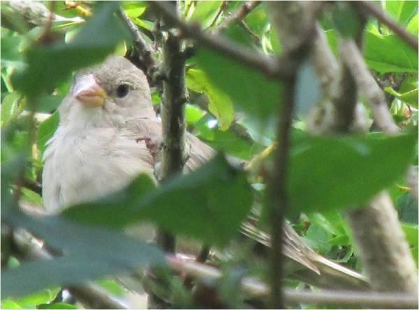 bird-in-the-bush