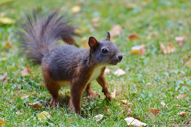 squirrel-2458467_640