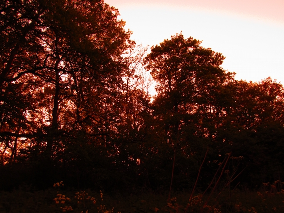 red-tinted-forest.jpg