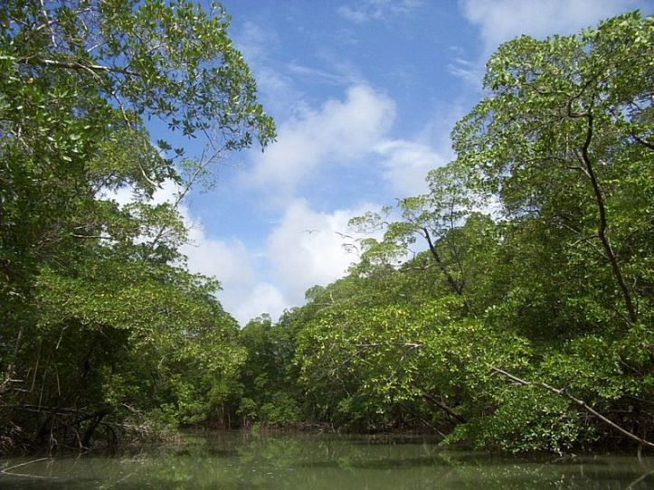 800px-River_in_the_Amazon_rainforest