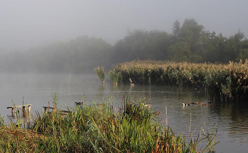 Komargorod_pond_2013_G3