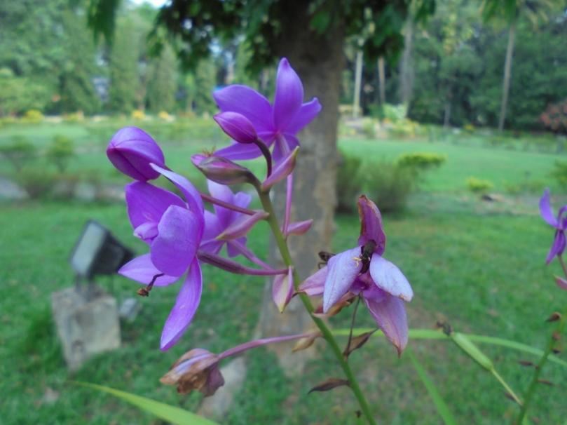 Tale-4-Flower