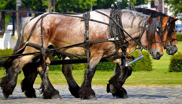 work-horses-2383623_640