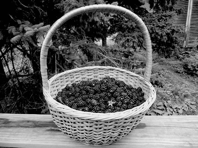 640px-Basket_of_wild_blackberries copy
