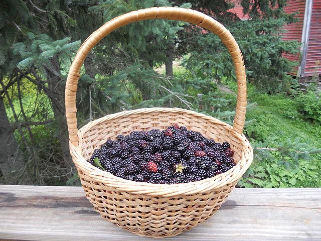 640px-Basket_of_wild_blackberries