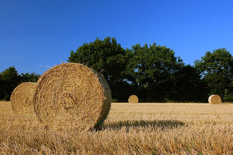 Harvest_Straw_Bales_in_Schleswig-Holstein.jpg