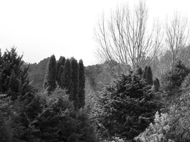 Landscape trees copy