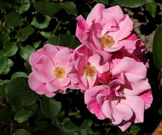 Rosa Else Poulsen