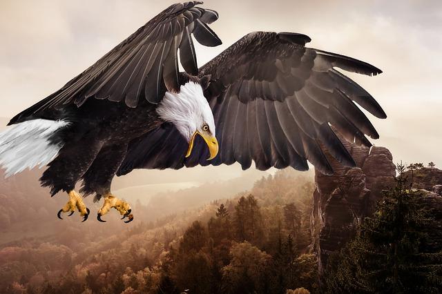 bird-3053074_640