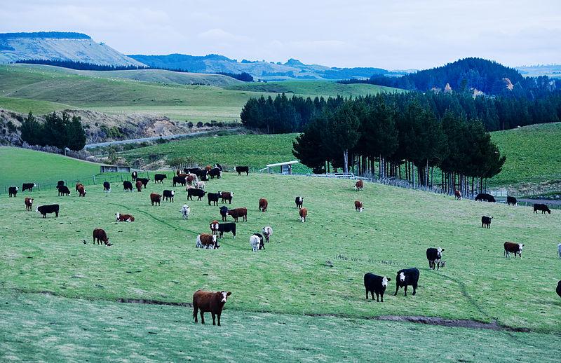 800px-New_Zealand_-_Landscape_-_8668