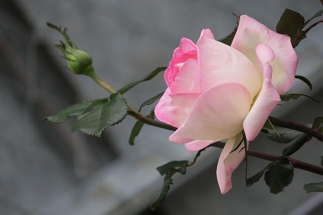 flower-3187194_640
