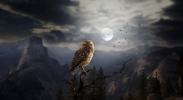 owl-2320703_640