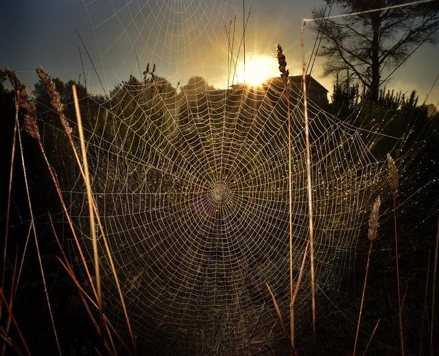 spiderweb-3255340_640