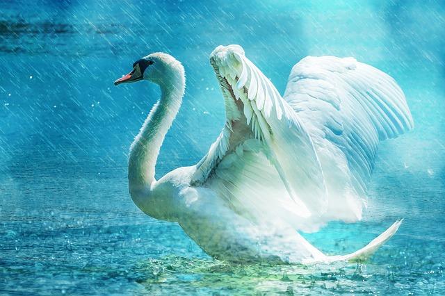 swan-584412_640