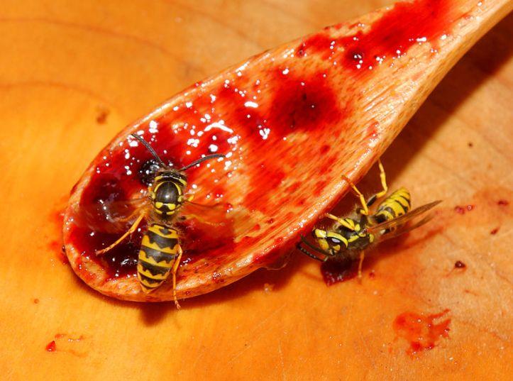 vespula_ germanica_wasp