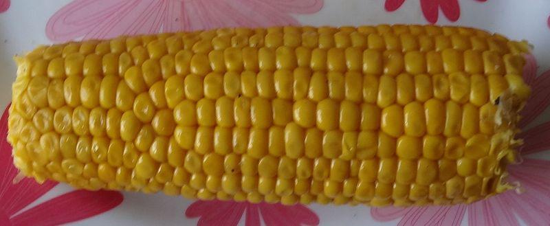 800px-maize