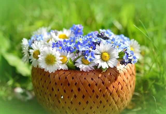 daisy-3382739_640