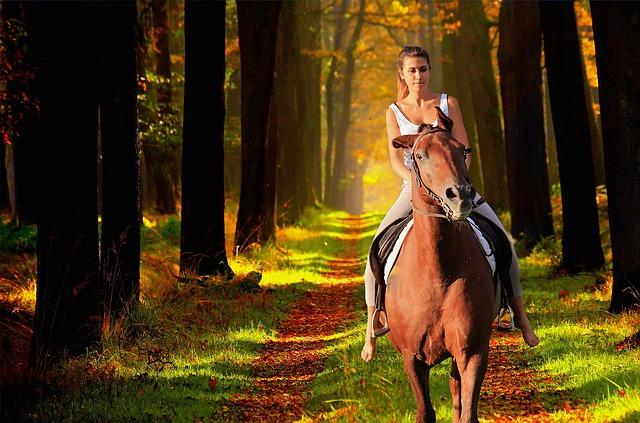 horse-3411331_640