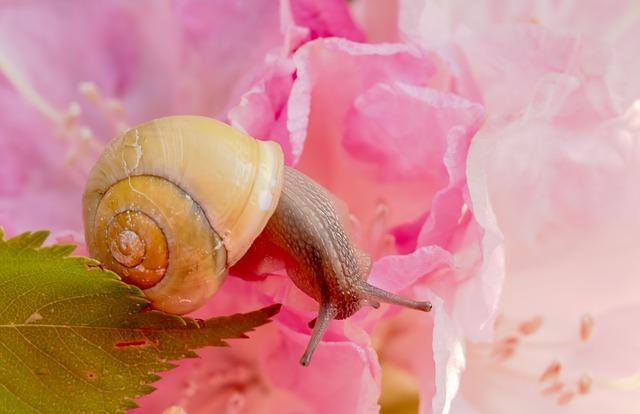 snail-3393204_640