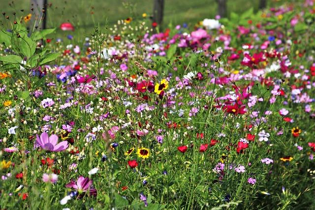 wild-flowers-3526829_640