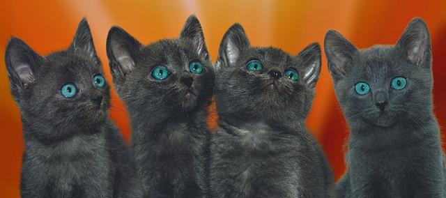cat-3613449_640