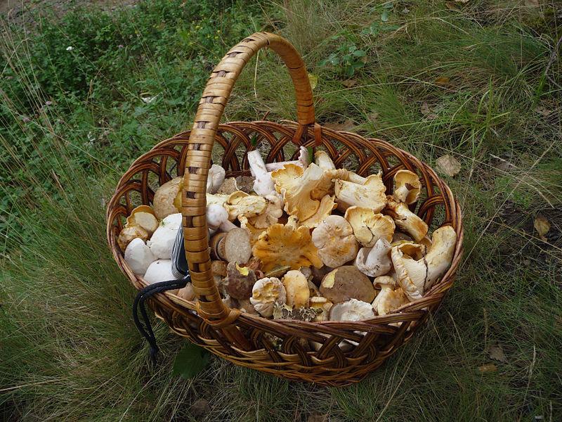 800px-Edible_fungi_in_basket