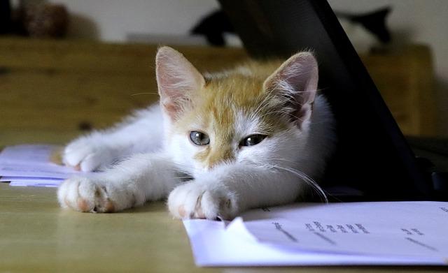 cat-3599255_640